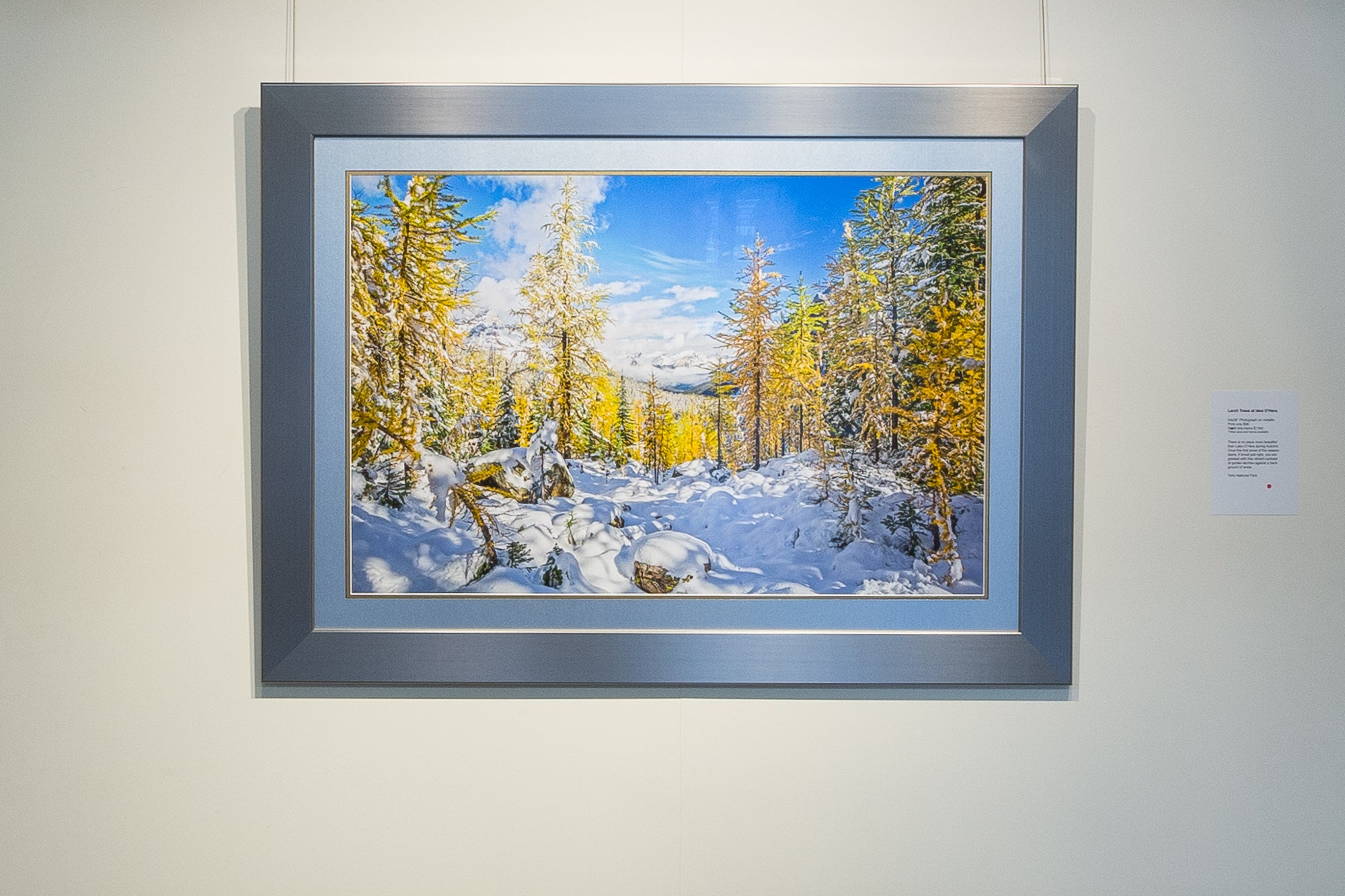 Framed Art | Lake O'Hara Larches