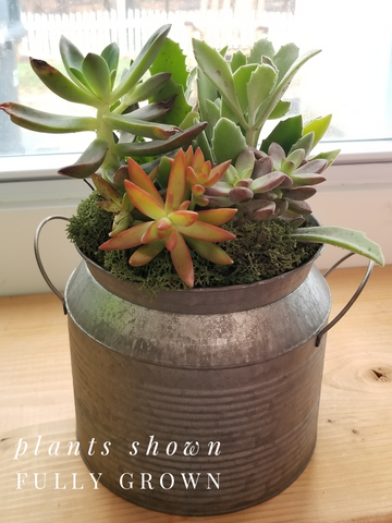 Succulent Workshop May 4th at 5pm.