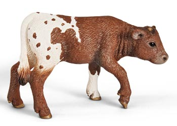 Texas Longhorn - Calf