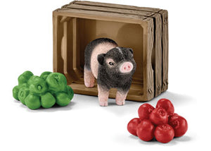 Mini-Pig with Apples