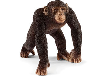 Chimpanzee - Male