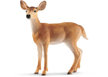 White Tailed Dear - Doe