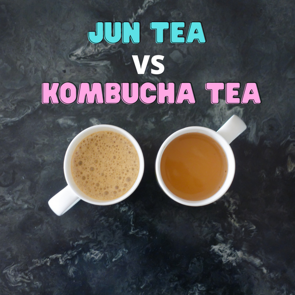 Jun Kombucha vs Kombucha Tea Scoby