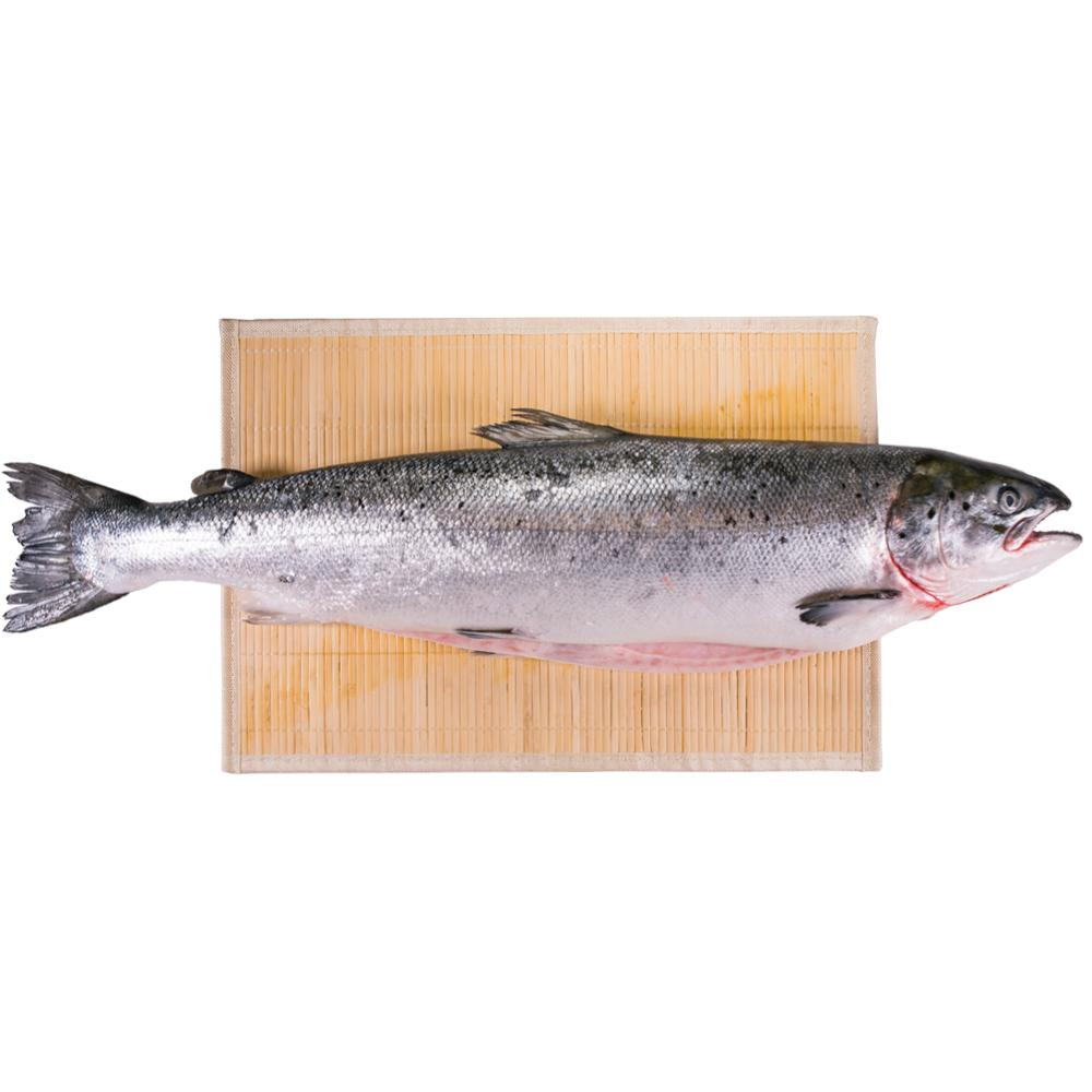 Fresh Whole Norwegian Salmon (Approx. 5.5kg)
