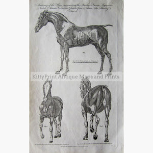 Anatomy Of The Horse 1789 Prints