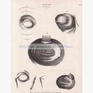 Anatomy Organs Of Sense Eye 1810 Prints