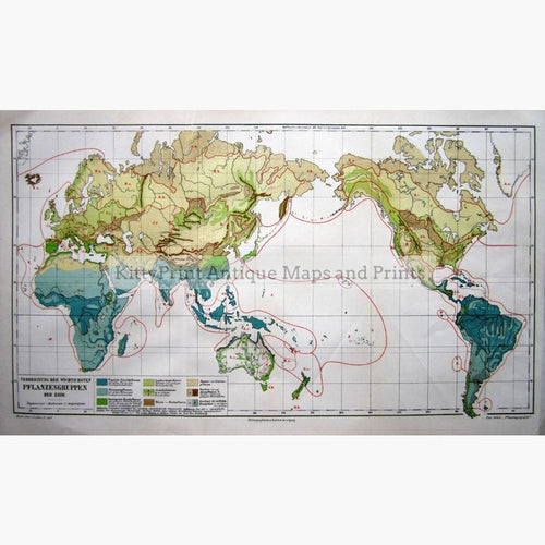 Antique Map World Plants 1907 Maps