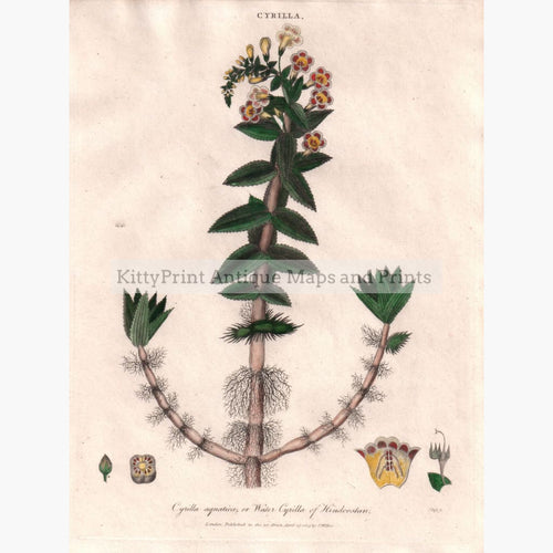 Antique Print Cyrilla 1809 Prints