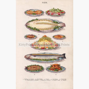 Antique Print Fish 1907 Prints