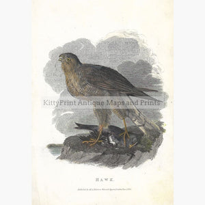Antique Print Hawk 1833 Prints