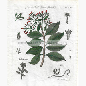 Antique Print Jesuits Bark ( Cinchona Officinalis) 1797 Prints