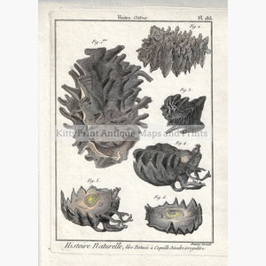 Antique Print Oysters Huitre 1790 Prints