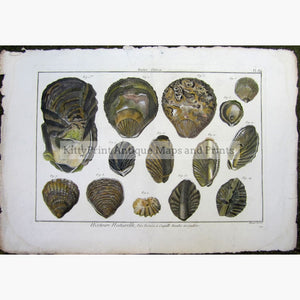 Antique Print Oysters plate 184 c.1790 Prints