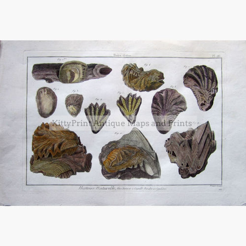 Antique Print,Oysters plate 185 c.1790 Prints