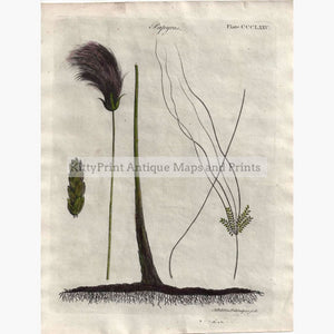 Antique Print Papyrus 1797 Prints