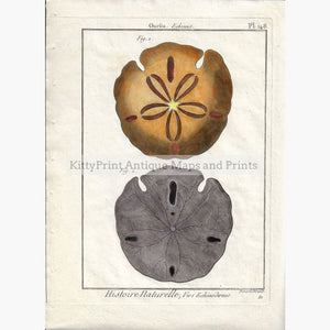 Antique Print Sea Urchin Oursin Echinus plate 148 c.1790 Prints