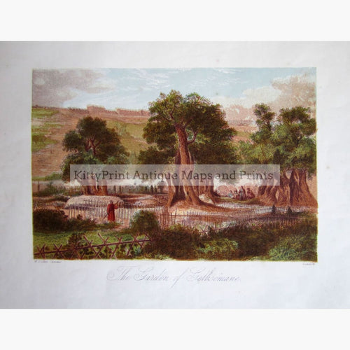 Antique Print The Garden Of Gethsemane C.1860 Prints