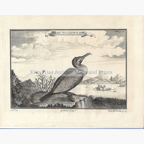 Antique Print The Lou-wa or Fishing Bird,1750 Prints