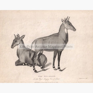 Antique Print The Nyl-Ghaus 1829 Prints