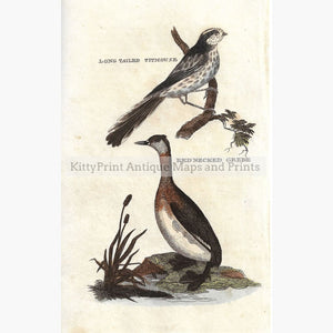 Antique Print Titmouse Grebe 1815 Prints