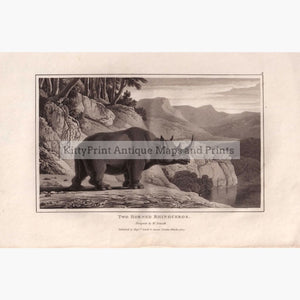 Antique Print Two Horned Rhinoceros. 1809 Prints