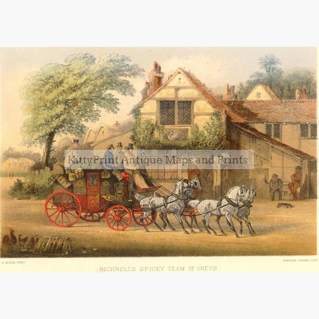 Bicknell's Spicey Team of Greys 1875 Prints KittyPrint 1800s England Horses