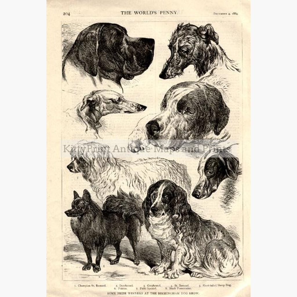 Birmingham Dog Show 1884 Prints KittyPrint 1800s Dogs