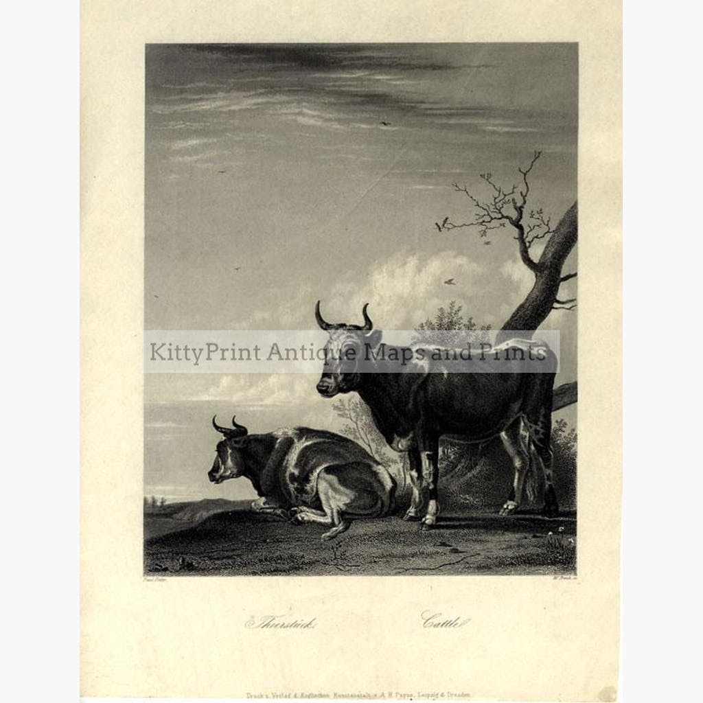 Cattle Thierstuck c.1850 Prints KittyPrint 1800s Monkeys & Primates