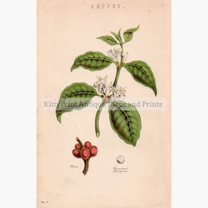 Coffee 1881 Prints