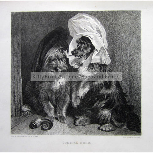Comical Dogs C.1860 Prints