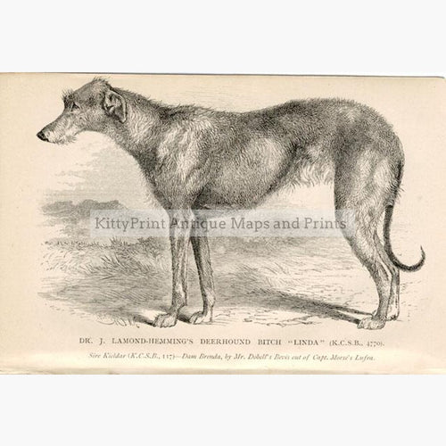 "Deer Hound ""Linda"" c.1880 Prints KittyPrint 1800s Dogs"