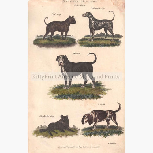 Dogs Order Canis 1828 Prints