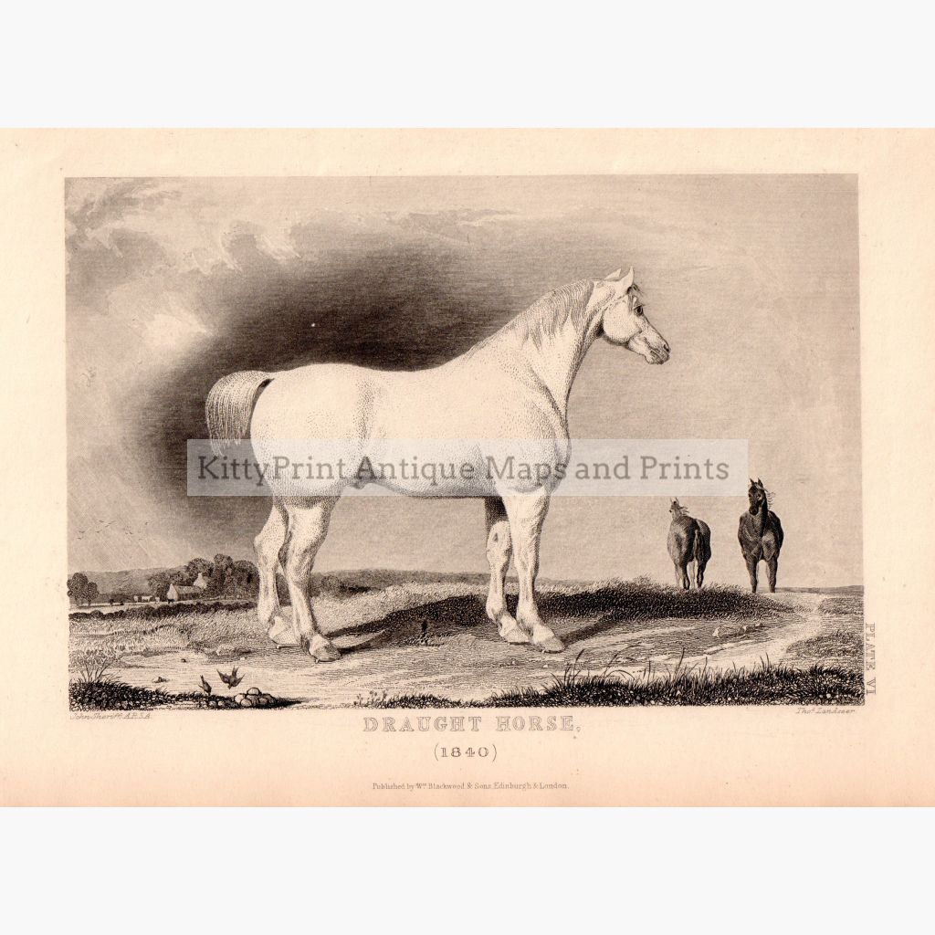 Draught Horse (1840) Prints