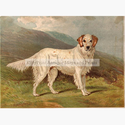 English Setter Ranger III 1881 Prints KittyPrint 1800s Dogs