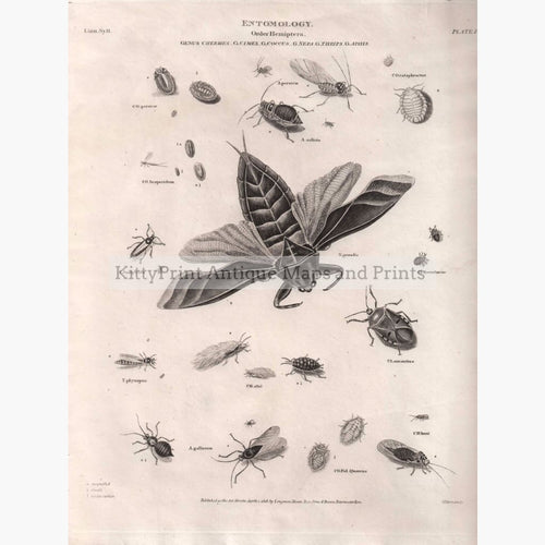Entomology Hemiptera Aphis 1818 Prints