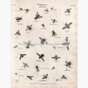 Entomology Musca 1818 Prints