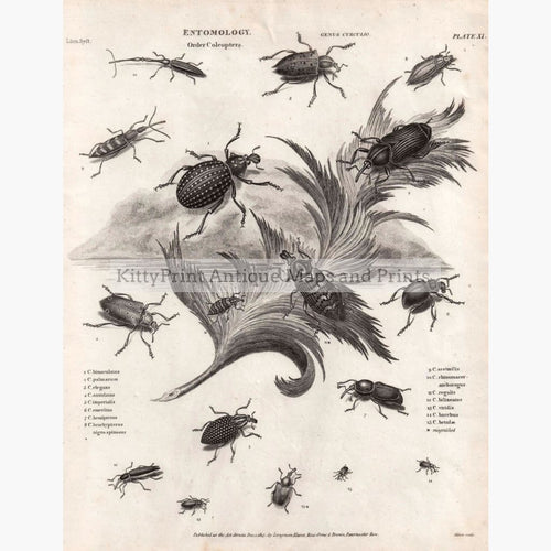 Entomology Order Coleoptera 1815 Prints