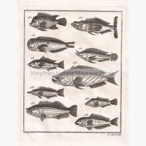 Fish by J.von Schley c.1740 Prints KittyPrint 1700s Fish