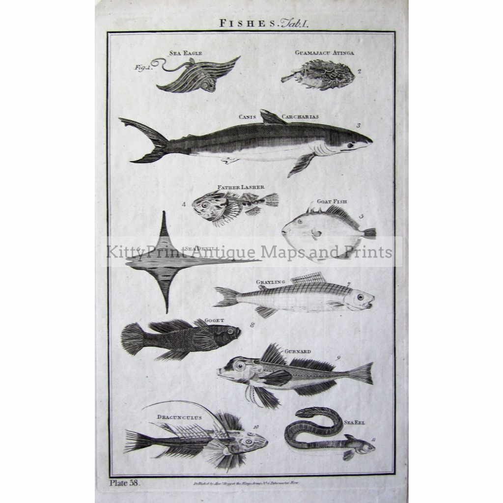 Fishes Plate 58. 1790 Prints