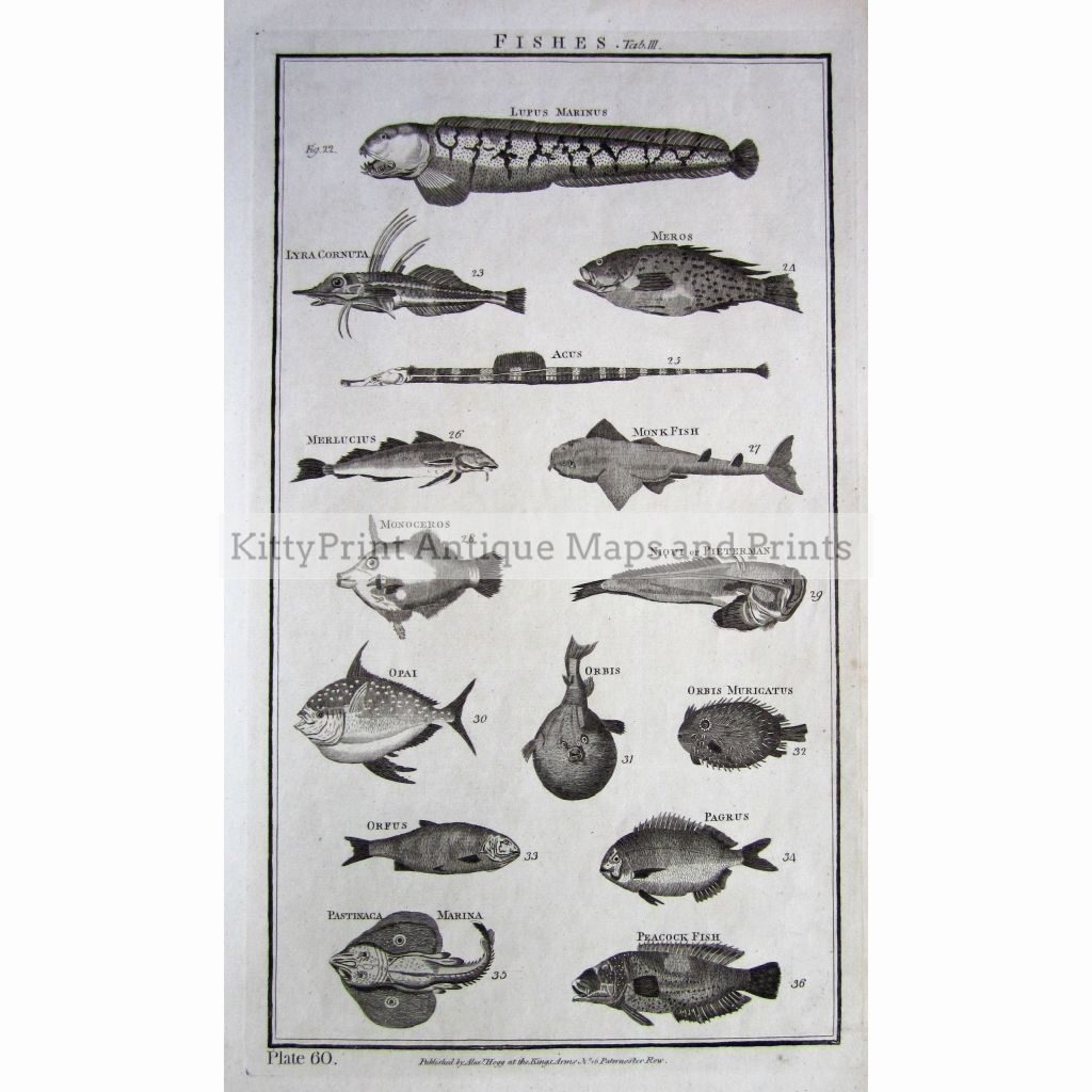 Fishes Plate 60. 1790 Prints
