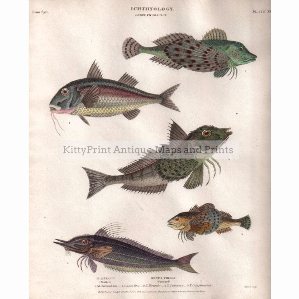 Fish,thoracici 1812 Prints