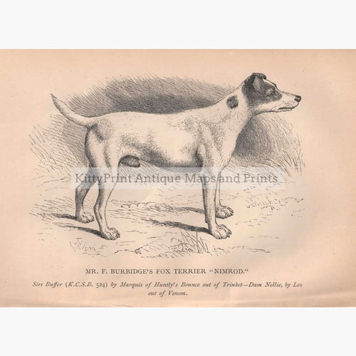 Fox Terrier 1880 Prints