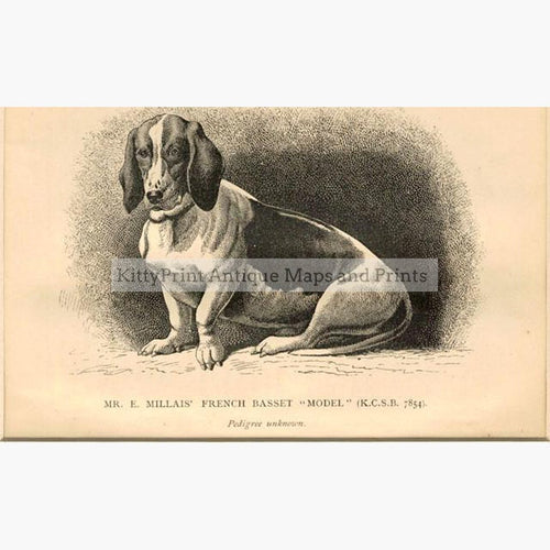 "French Basset ""Model"" c.1880 Prints KittyPrint 1800s Dogs"