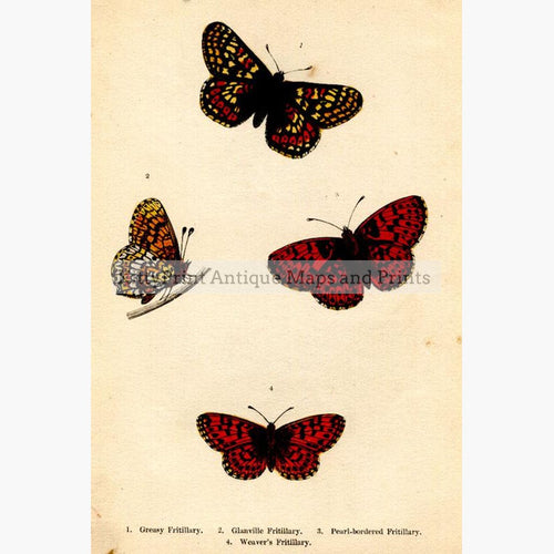 Fritillary Greasy Glanville Pearl-bordered and Weaver 1854 Prints KittyPrint 1800s Insects & Reptiles