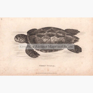 Green Turtle 1801 Prints