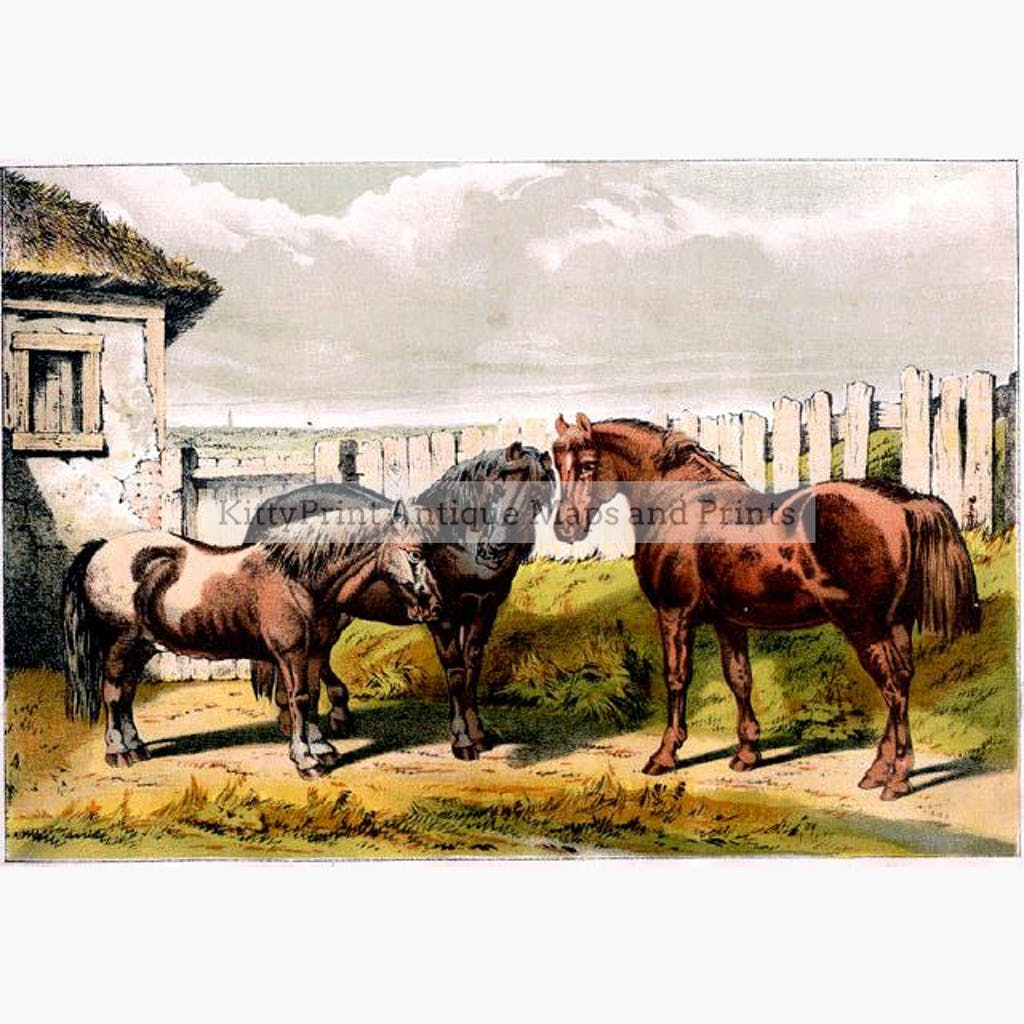 Group of Ponies c.1880 Prints KittyPrint 1800s Horses