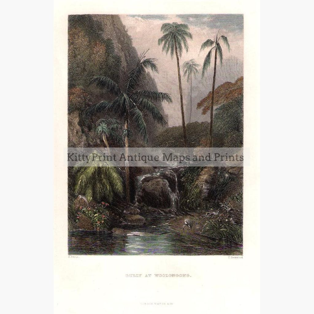 Gully at Woolongong (Wollongong New South Wales) c.1840 Prints KittyPrint 1800s Australia & Oceania Landscapes