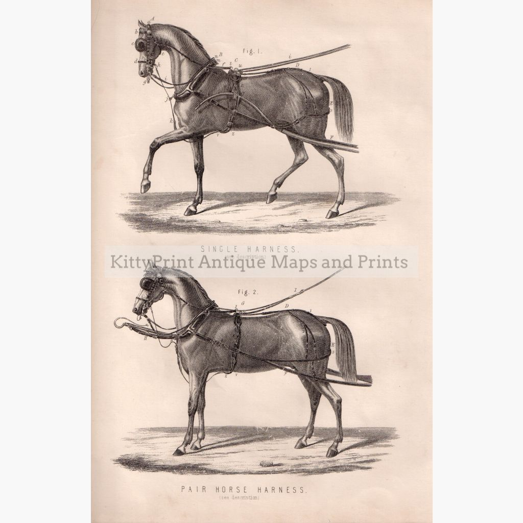 Horse Harness C.1880 Prints
