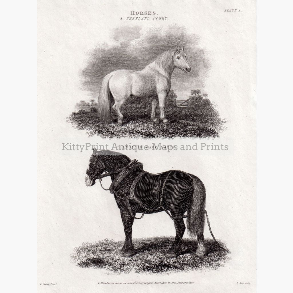 Horses. Shetland Pony English Cart Horse 1805 Prints