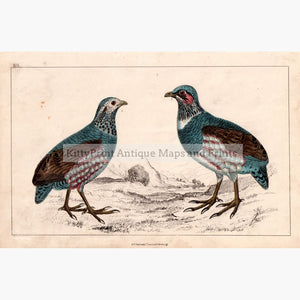 Large-Footed Partridge,c.1840 Kittyprint Prints